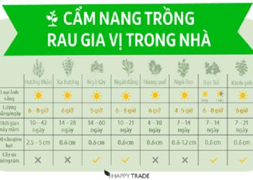 Cẩm nang trồng cây gia vị tại nhà hiệu quả