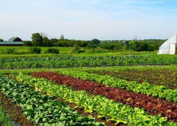 4 đặc trưng cơ bản của trang trại rau hữu cơ không phải ai cũng biết