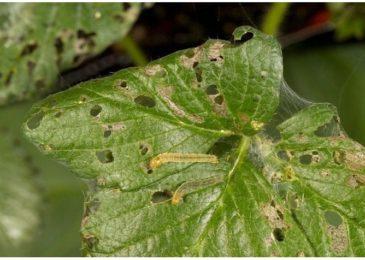 8 công thức làm các loại thuốc trừ sâu hữu cơ cực hiệu quả ngay tại nhà