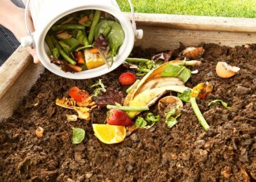 6 bước cơ bản tự làm phân hữu cơ tại nhà cho người mới bắt đầu